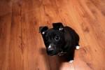Corner`s Pet Loves Puppies!